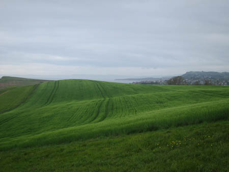 rolling fields of green grain